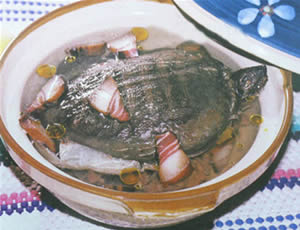 stewed-soft-shelled-turtle